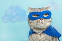γάτα superhero, σκωτσέζικο Whiskas με έναν μπλε επενδύτη και μια μάσκα Η έννοια ενός superhero, έξοχη γάτα, ηγέτης στοκ εικόνα