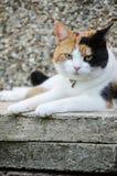 Γάτα Tricolor που περιβάλλεται από το γκρίζο σκυρόδεμα στοκ εικόνα με δικαίωμα ελεύθερης χρήσης