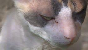 Γάτα Tricolor στην ημέρα sammer φιλμ μικρού μήκους