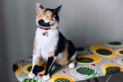 Γάτα Tricolor όλοι στην προσοχή Στοκ εικόνα με δικαίωμα ελεύθερης χρήσης