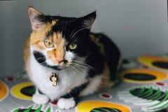 Γάτα Tricolor όλοι στην προσοχή Στοκ φωτογραφίες με δικαίωμα ελεύθερης χρήσης