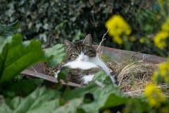 Γάτα wheelbarrow στοκ εικόνες με δικαίωμα ελεύθερης χρήσης