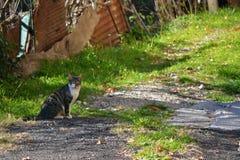 Γάτα Wiild Στοκ Εικόνες