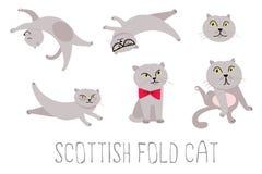 Γάτα William Στοκ φωτογραφία με δικαίωμα ελεύθερης χρήσης
