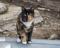 Γάτα yin-Yang στοκ φωτογραφίες