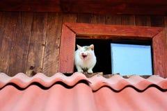 γάτες αστείες στοκ εικόνες