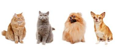 Γάτες και σκυλιά στοκ φωτογραφία