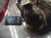 Γάτες και τεχνολογία στοκ εικόνες