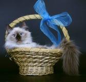 γάτες καλαθιών Στοκ φωτογραφία με δικαίωμα ελεύθερης χρήσης
