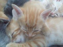 Γάτες καλές στοκ εικόνες