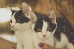 γάτες μικρά δύο Στοκ εικόνα με δικαίωμα ελεύθερης χρήσης