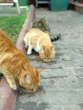 Γάτες οδών στοκ φωτογραφία