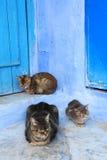 γάτες οκνηρές Στοκ Φωτογραφίες