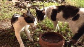 Γάτες πάλης φιλμ μικρού μήκους