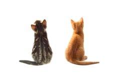 Γάτες πίσω Στοκ Εικόνες