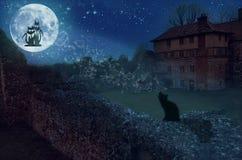 γάτες που αγαπούν το φεγ Στοκ φωτογραφία με δικαίωμα ελεύθερης χρήσης