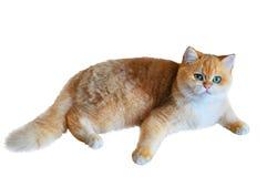 Γάτες που απομονώνονται Στοκ φωτογραφία με δικαίωμα ελεύθερης χρήσης