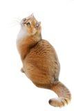 Γάτες που απομονώνονται Στοκ εικόνες με δικαίωμα ελεύθερης χρήσης