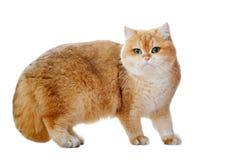 Γάτες που απομονώνονται Στοκ εικόνα με δικαίωμα ελεύθερης χρήσης