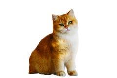 Γάτες που απομονώνονται Στοκ Φωτογραφίες