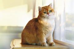 Γάτες που πετιούνται στον πίνακα από το παράθυρο Στοκ Φωτογραφίες