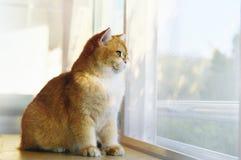 Γάτες που πετιούνται στον πίνακα από το παράθυρο Στοκ εικόνες με δικαίωμα ελεύθερης χρήσης