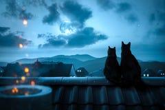 Γάτες που προσέχουν τη πανσέληνο σε μια στέγη στοκ εικόνες