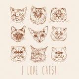 γάτες που τίθενται _ Σιαμέζες, βρετανικές, σιβηρικές, περσικές, σκωτσέζικες πτυχές, Μαίην Coon, Βεγγάλη, Sphynx στο εκλεκτής ποιό Στοκ εικόνα με δικαίωμα ελεύθερης χρήσης