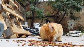 Γάτες που τρώνε την ξηρά γάτα Foodσε ένα κατώφλι ενός εγκαταλειμμένου σπιτιού απόθεμα βίντεο