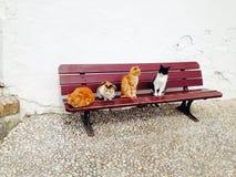 Γάτες σε έναν πάγκο Στοκ φωτογραφία με δικαίωμα ελεύθερης χρήσης