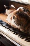 Γάτες σε ένα πιάνο Στοκ Εικόνες