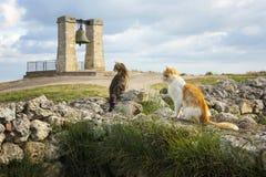 Γάτες σε Hersones Στοκ φωτογραφία με δικαίωμα ελεύθερης χρήσης