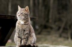 Γάτες 001 σπιτιών στοκ εικόνες