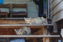 Γάτες στη λεπτομέρεια κινηματογραφήσεων σε πρώτο πλάνο σκαλοπατιών Στοκ φωτογραφίες με δικαίωμα ελεύθερης χρήσης