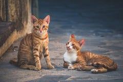 Γάτες στις οδούς Chania, νησί της Κρήτης στοκ εικόνες με δικαίωμα ελεύθερης χρήσης