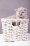 Γάτες στο καλάθι Στοκ φωτογραφία με δικαίωμα ελεύθερης χρήσης