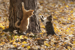 Γάτες στο πάρκο Στοκ εικόνες με δικαίωμα ελεύθερης χρήσης