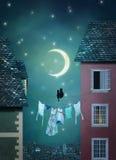 Γάτες στο χωριό τη νύχτα
