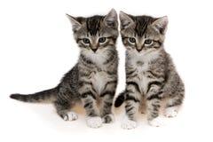 γάτες χαριτωμένα δύο Στοκ φωτογραφία με δικαίωμα ελεύθερης χρήσης