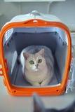 Γάτες χαριτωμένες Στοκ φωτογραφία με δικαίωμα ελεύθερης χρήσης