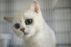 Γάτες χαριτωμένες Στοκ Φωτογραφία