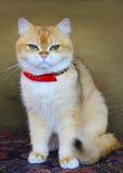 γάτες χαριτωμένες Στοκ Εικόνες