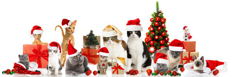 Γάτες Χριστουγέννων Στοκ Εικόνα