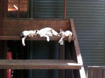 Γάτες ύπνου στοκ φωτογραφίες