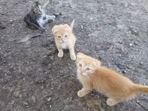 Γάτες Στοκ φωτογραφίες με δικαίωμα ελεύθερης χρήσης