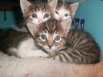 Γάτες Στοκ Εικόνες