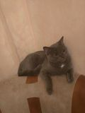Γάτες! Στοκ Φωτογραφία