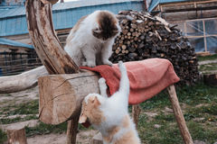 Γάτες Στοκ Φωτογραφία