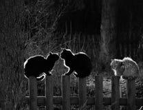 Γάτες Στοκ εικόνα με δικαίωμα ελεύθερης χρήσης
