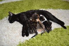 Γάτες mom Στοκ Εικόνες